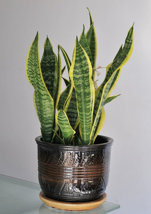 Three indoor plants that greatly improve air quality
