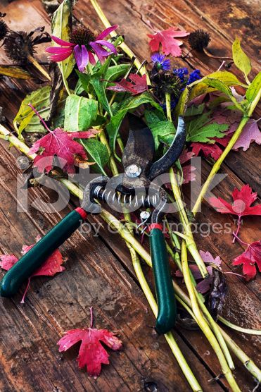 garden shears on the background of the cut branches, leaves royalty-free stock photo