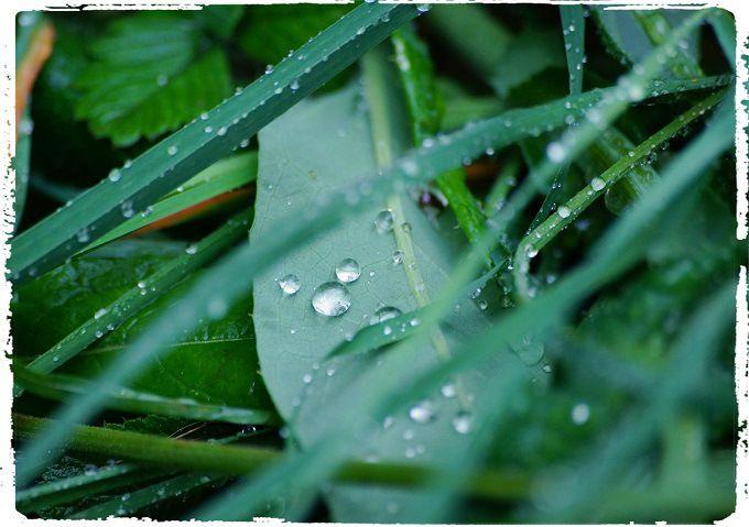 After the rain. #poetry #freeimages #freepictures #freephotos #haiku #rain #green #raindrops