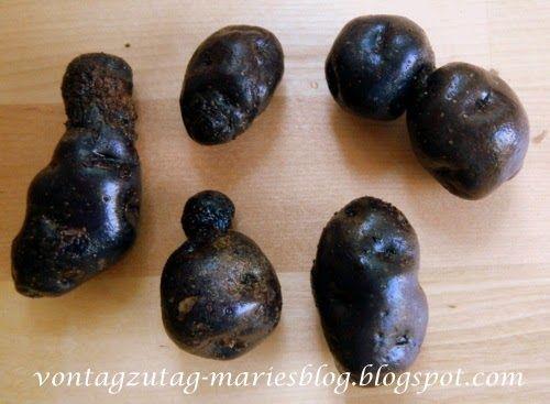 @vontagzutagmari Blaue Kartoffeln aus eigener Ernte. Eine echte Rarität. http://vontagzutag-mariesblog.blogspot.com
