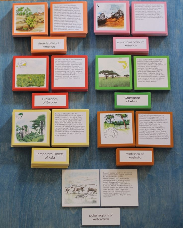 Designed for elementary classes, this material covers all the biomes found on a particular continent and offers a structure for independent research. Three-part cards include: a description card for o