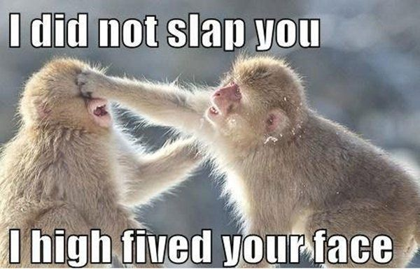 30 Funny animal captions - part 6 (30 pics) | Amazing Creatures Like this.