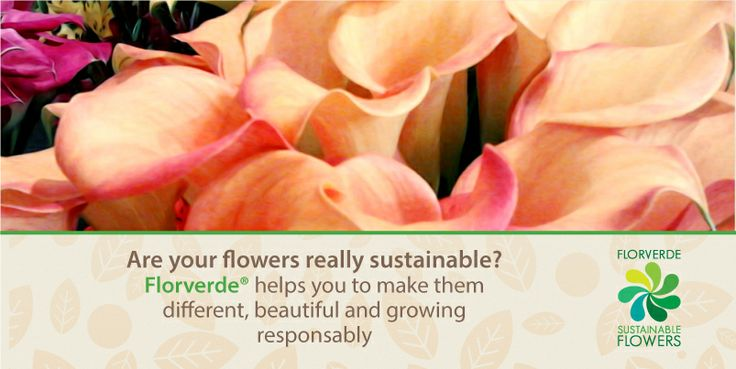 Are your #flowers really sustainable? #Florverde helps you to make them different, beautiful and growing responsibly