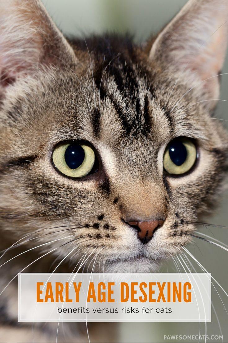 Early Age Desexing Benefits vs Risks Sick cat, Cat vet