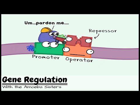 712 best AP Biology images on Pinterest Ap biology, Biology - new blueprint gene expression