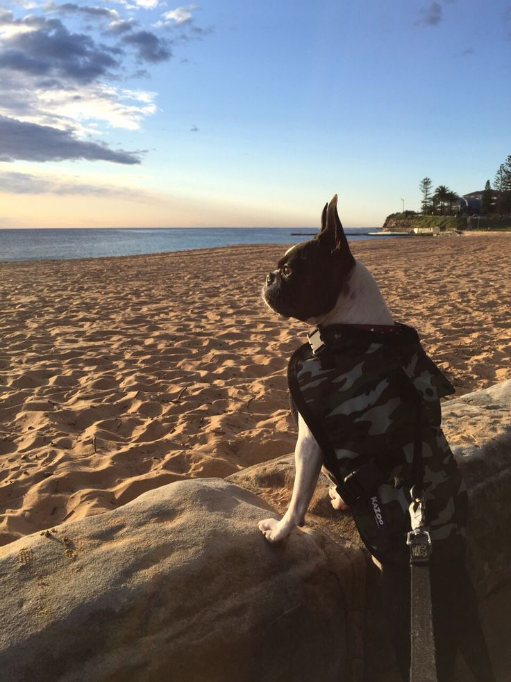 Checking out the surf at Collaroy Beach, Sydney