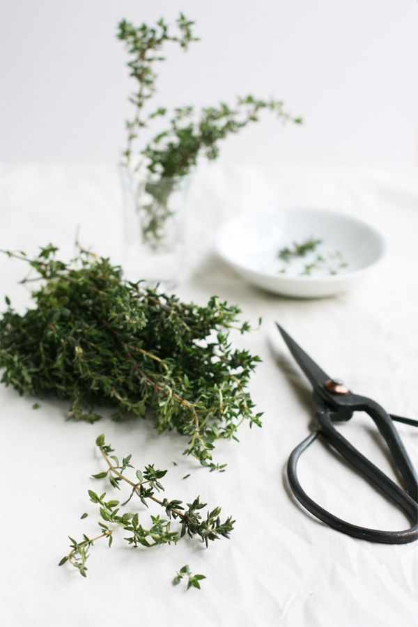 Healing Thyme