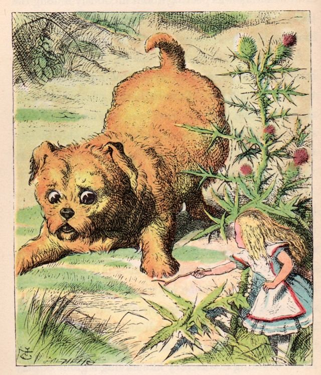dog looking at tiny alice alices adventures in wonderland by lewis carroll illustrated by