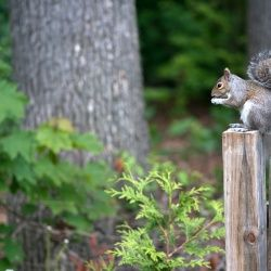 NYC Squirrel Is Attacking People. Is It Rabid Or Just Nuts?