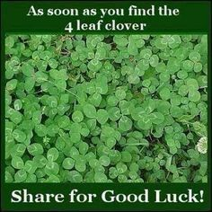 Good luck, Clovers and Lol on Pinterest