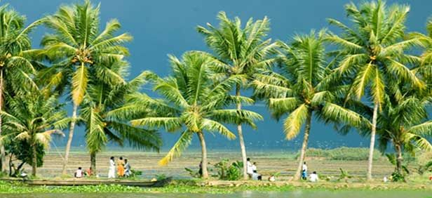 There are several honeymoon packages in India 2015 that are waiting for you to explore your dream destination for honeymoon in India. You can hit the places like Kerala,Nainital,Shimla,Ooty,Goa from Delhi,Vadodara,Uttarakhand,Bangalore,Pune,Surat. For Details visit : http://www.indianhoneymoonpackages.com/