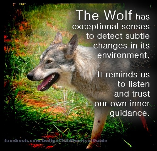 The wolf is a powerful spirit animal for many. With its keen senses, it teaches us to trust in our own senses.