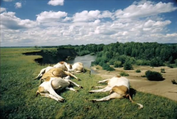 RUSSIA. Altai Territory. 2000. Dead cows lying on a cliff. The local population claim whole herds of cattle and sheep regularly die as a result of rocket fuel poisoned soil. Incredible Photographs of Life in Ex-Soviet Bloc Countries http://www.visiontimes.com/2015/07/21/incredible-photographs-of-life-in-ex-soviet-bloc-countries.html