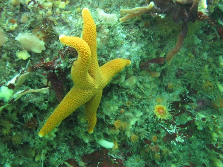 Scuba diving Cape Town