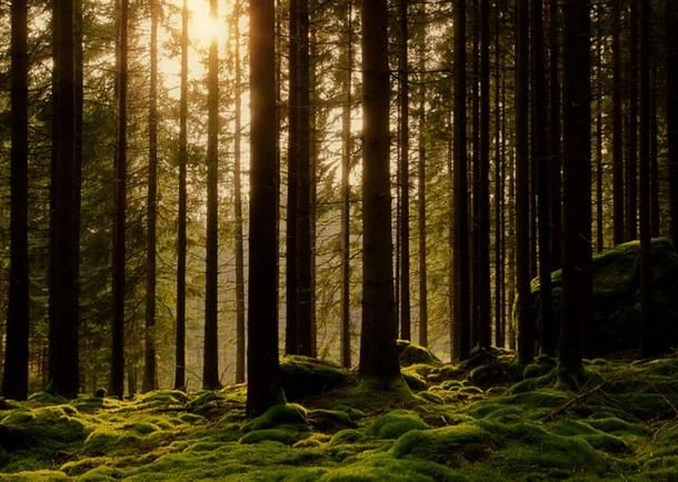 The ancient Viking language of Elfdalian has been almost entirely wiped out, with only 2,500 people in a tiny forest community in Sweden currently keeping it alive. Now people fight to revive the hist