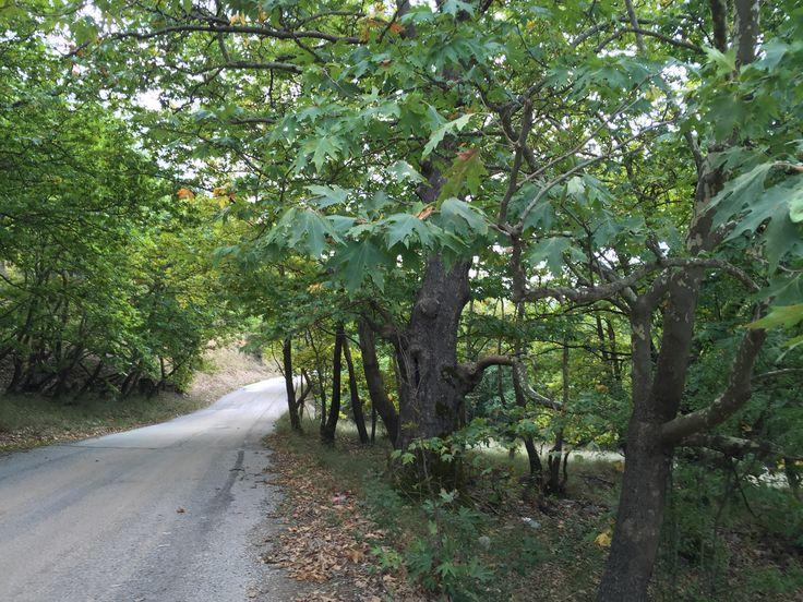 29. Forest road.   Kalavrita, Greece (Zachlorou area)
