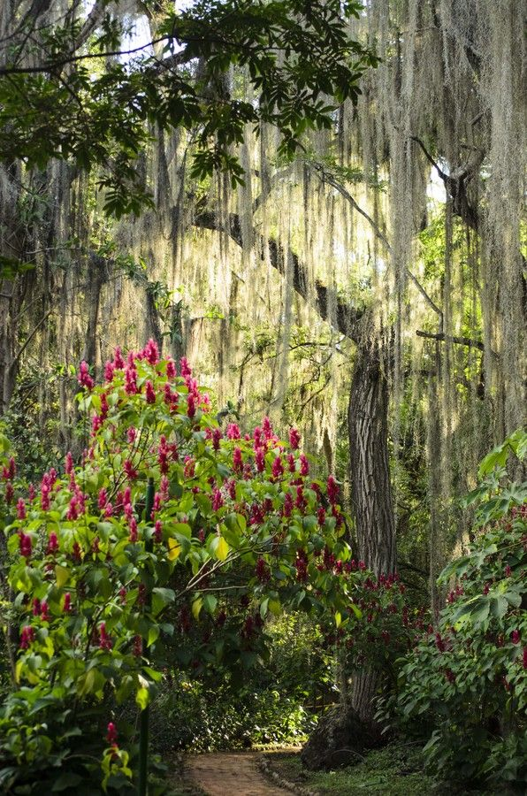 Bellos gallineros colgados en árboles centenarios Visite Parque Gallineral en San Gil Nature by Diego Agudelo on 500px