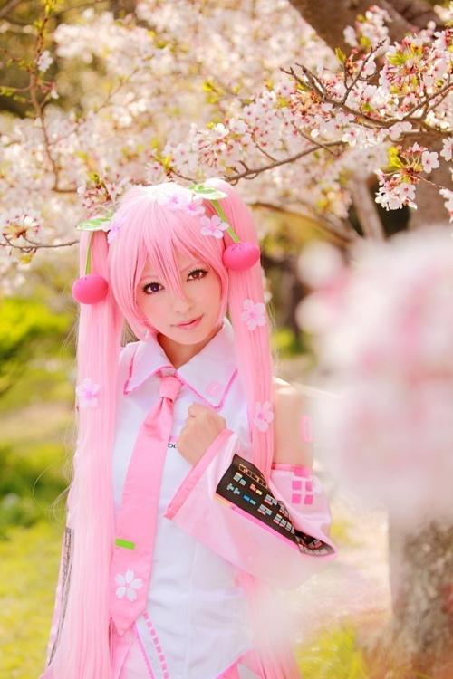 Sakura Miku ヽ(*・ω・)ノ