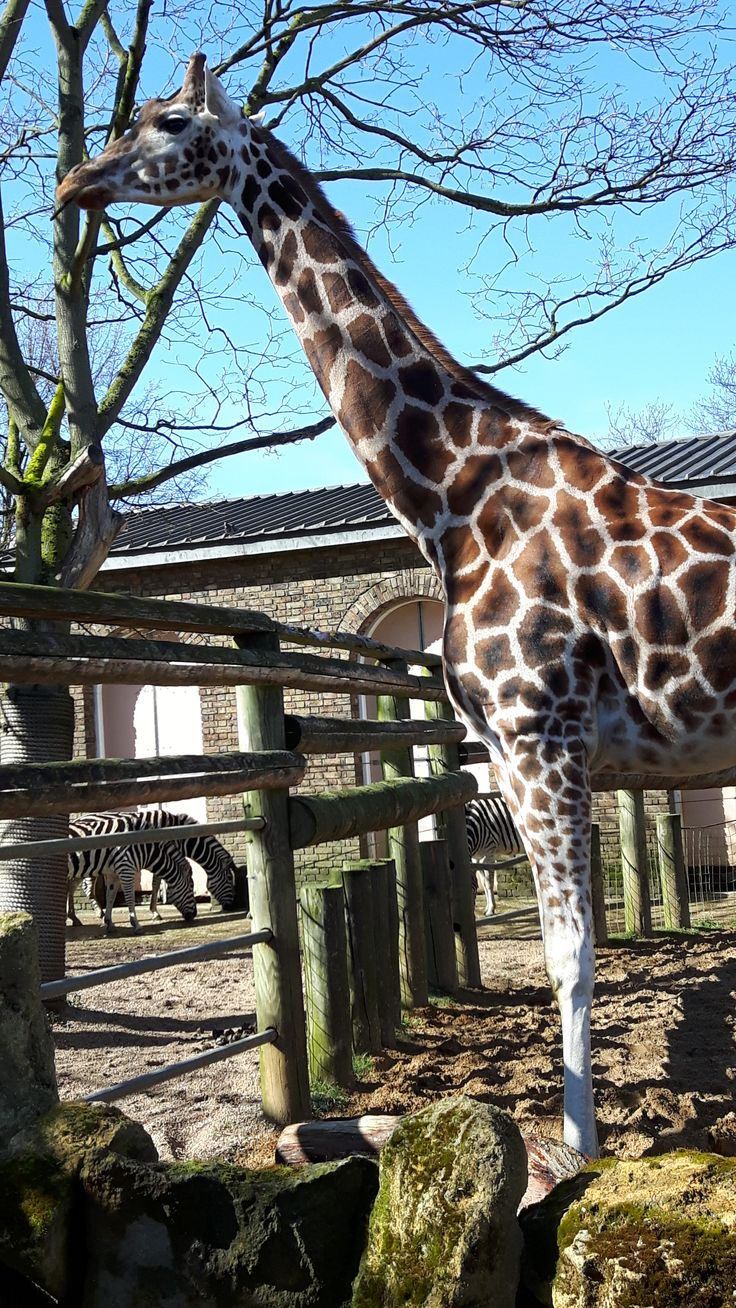 London Zoo amazing place