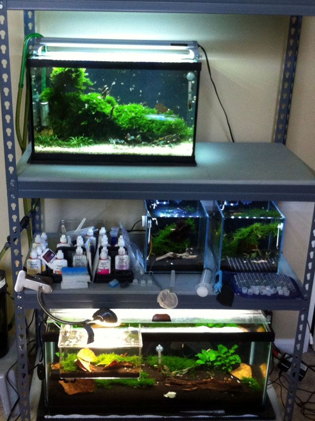 Shrimp Tank Rack Google Search Fresh Water Fish Tank
