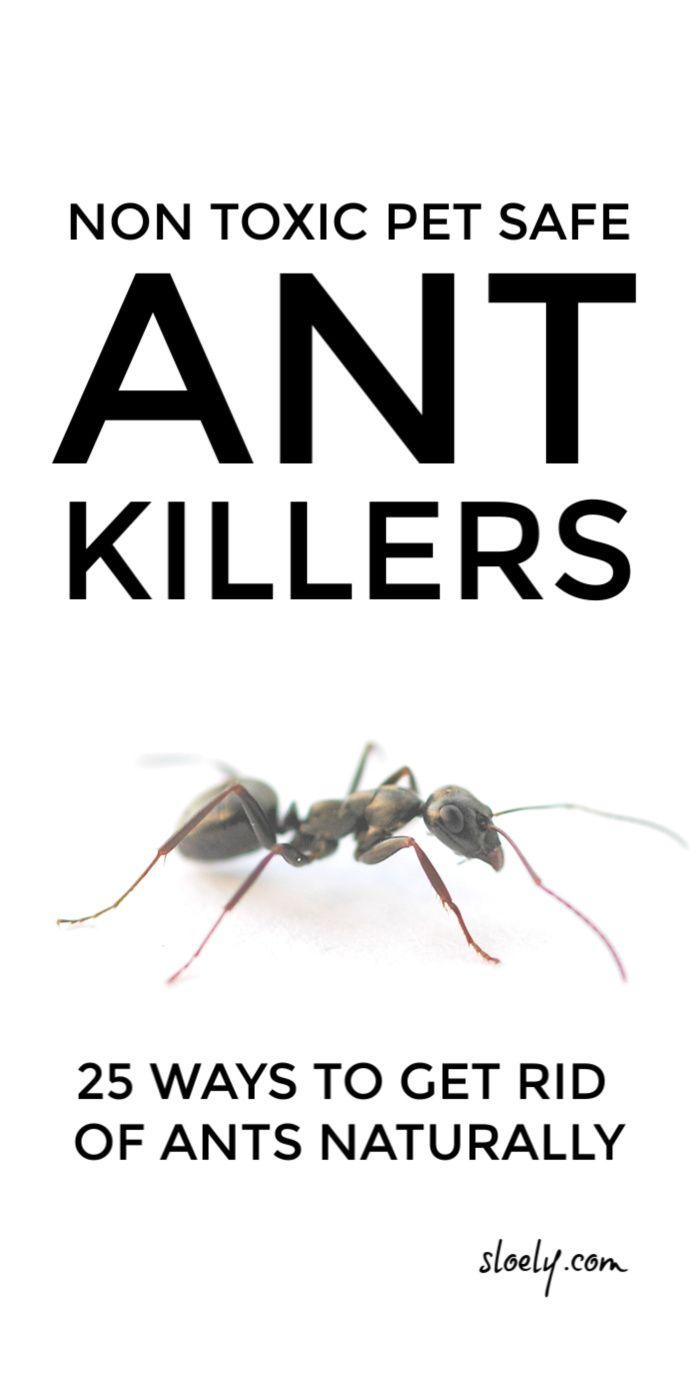 How To Get Rid Of Ants In Bedroom Diy