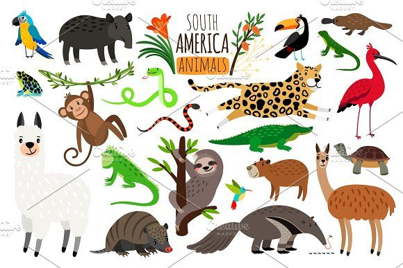 South America Animals Vector Cartoon Guanaco And Iguana Anteater