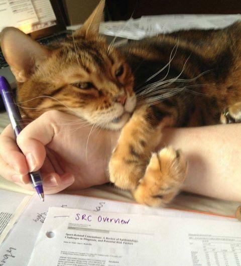 Basta studiare,  gioca con me