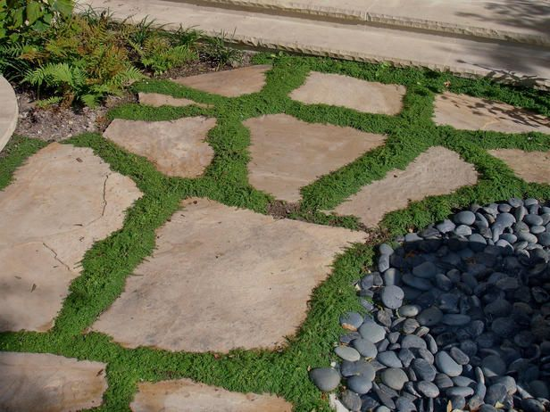 Creeping thyme for pathway filler looks like grass but for Stone path in grass