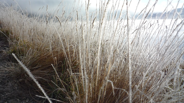 Sun breaking through on to the hoar frost coated grasses... Central Otago. http://www.centralotagonz.com/flat-top-hill