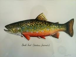 Lovely print of a Brook Trout.