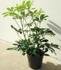 live plants, tillandsias, ficus and more for your reptile terrarium or living vivarium!