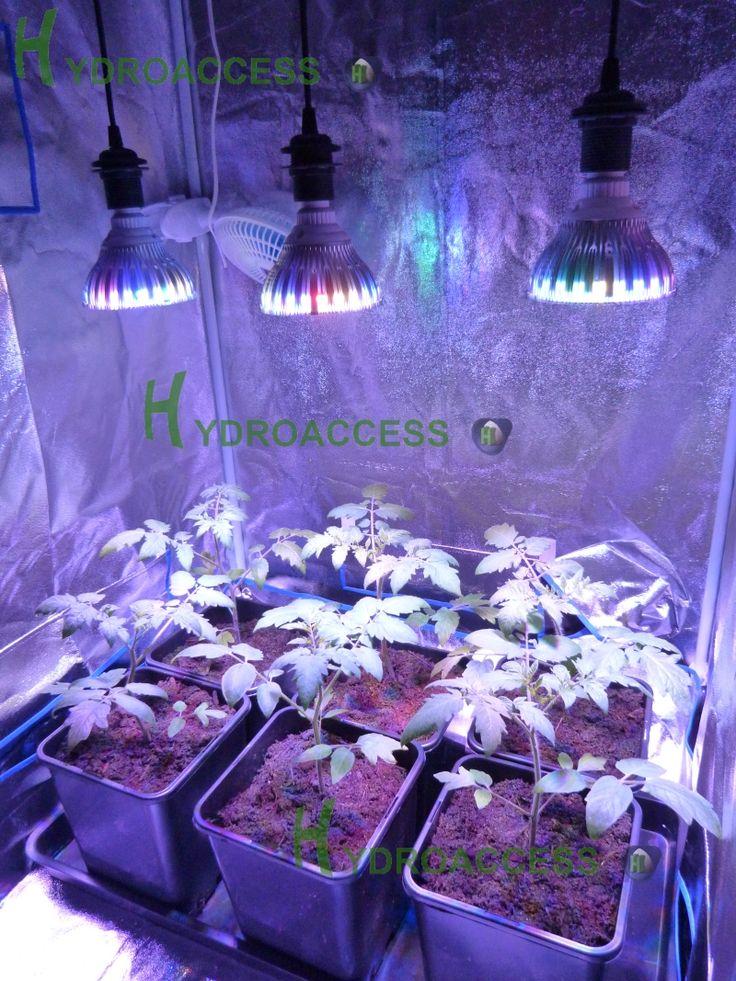led horticole cannabis latest graines de cannabis sous lampe led with led horticole cannabis. Black Bedroom Furniture Sets. Home Design Ideas