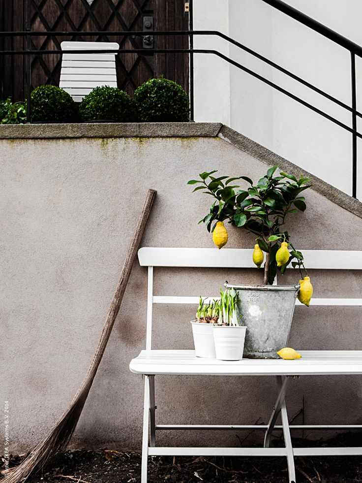 i want a lemon tree soooo bad. :)  Gästbloggare: En stund i vårsolen | Livet Hemma – IKEA