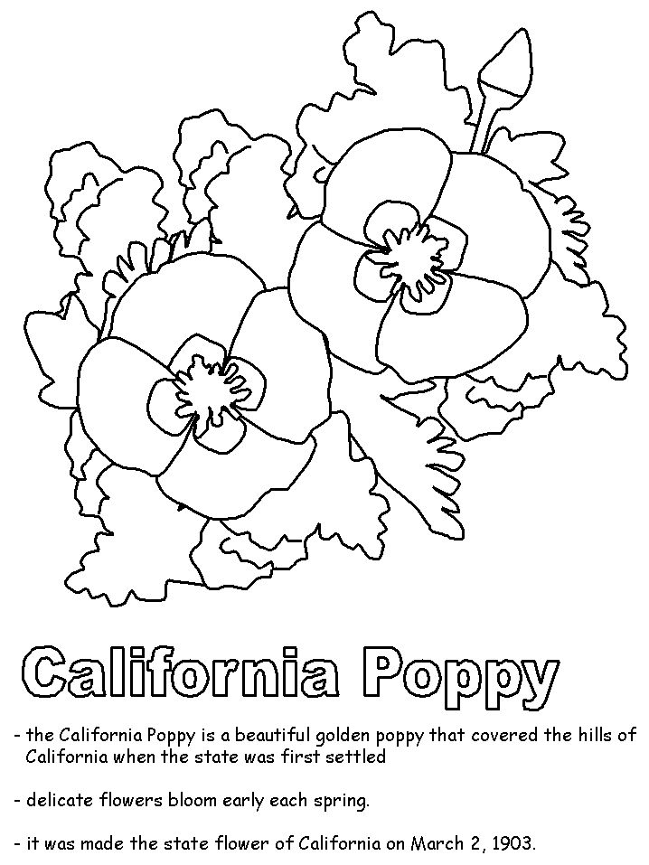 plant coloring pages science experiments - photo#11