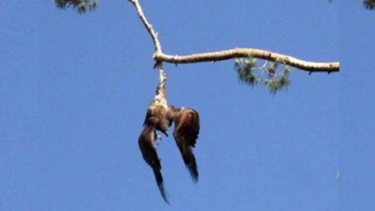 Army Veteran Saves Eagle Hanging In Tree When No One Else Would