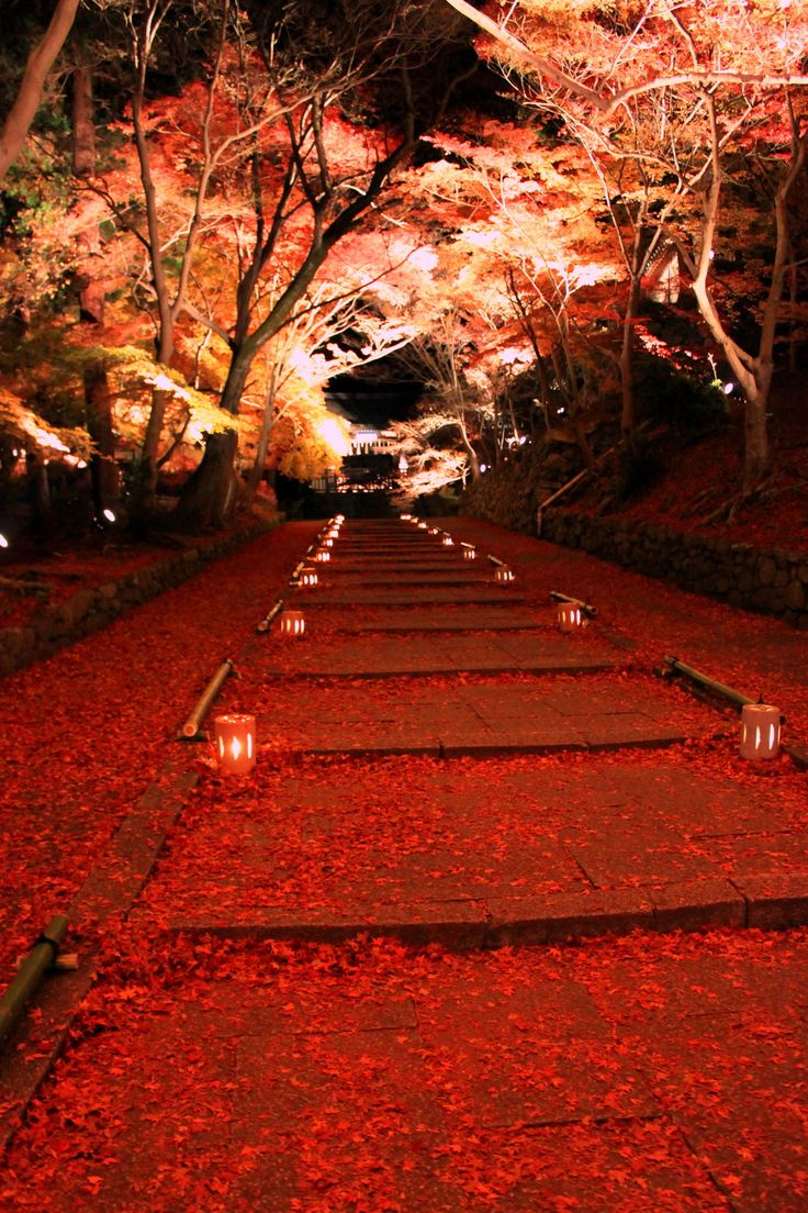 Kyoto, Japan via 散りもみじの道 毘沙門堂 Autumn Leaves