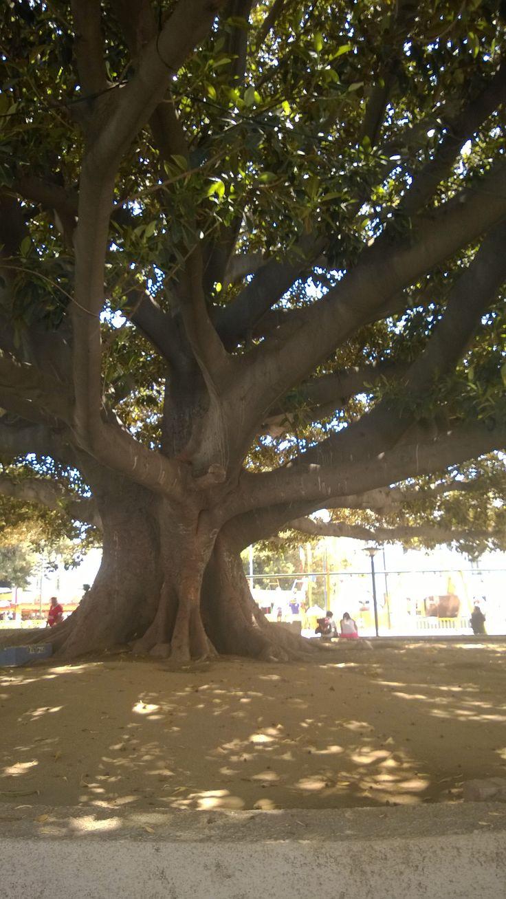 Valpo ... in a Tree