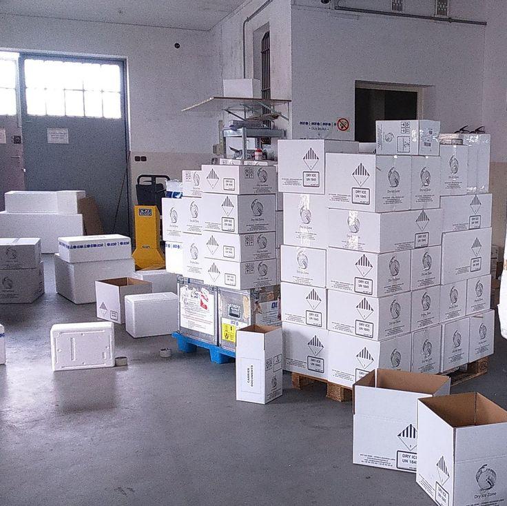 Zestawy suchego lodu ustawione na palecie oczekują na formę kurierską, która dostarczy suchy lód pod podany w formularzu zamówień adres. Zestawy suchego lodu pakowane są przed wysyłką po to, aby strat suchego lodu było jak najmniej.