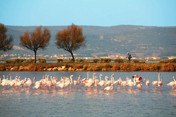 Les 37 meilleures images propos de paysages de - Office du tourisme languedoc roussillon ...