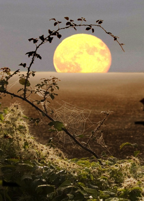 . ... . and there's the Moon, helplessly decorated by branches of wild Roses with thorns, graciously designed Webs and a calm Ocean <3 <3 <3