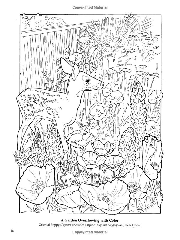 The Flower Garden Coloring Book Ruth Soffer 9780486444970 Books