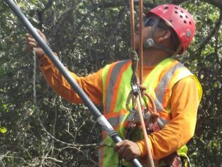 tree service company, tree removal, tree trimming, tree stump removal, etc