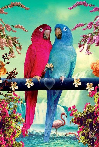 LIP: P15 - Ansichtkaart - Parrots | Ansichtkaarten - Postcards | kaartfanaat
