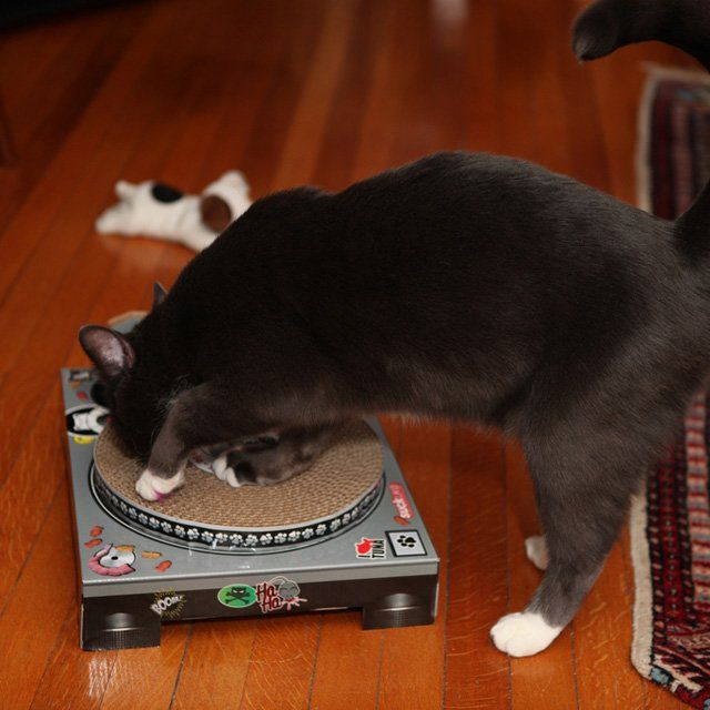 DJ Cat Scratch Turntable | Share The Love! | Pinterest