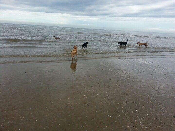 Dog beach #Noordwijk #Hundestrand