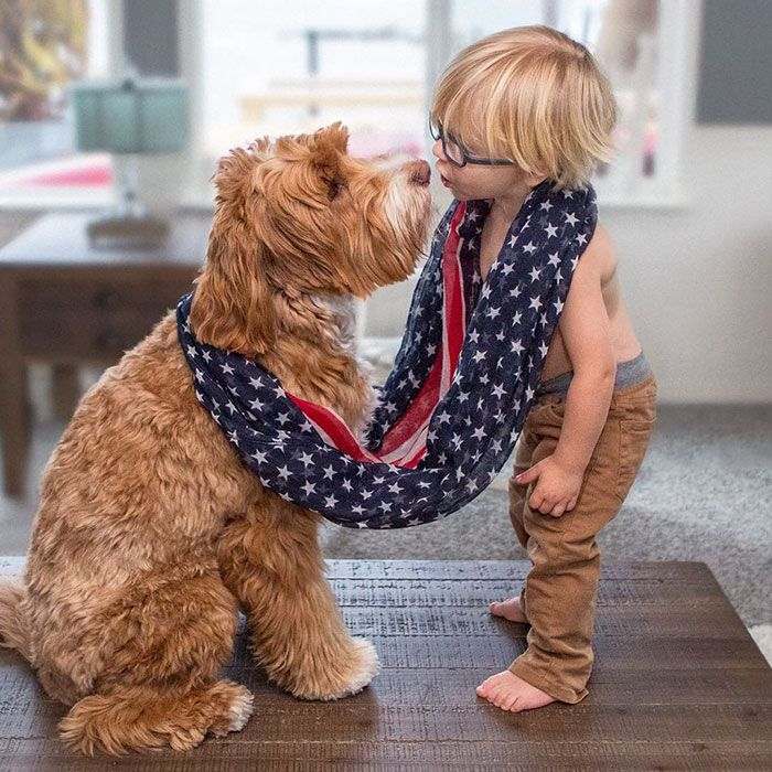 3-year-old foster child Buddy and his best friend Reagan the adorable labradoodle are releasing a charitable book to support a foster parent organization! The cutest duo ever do everything together, whether it's taking a bath, enjoying coffee by the water, napping, or playing on swings. The touching, true story of Reagan and Little Buddy needed to be told. I couldn't keep all the adorableness to myself, Sandi Swiridoff, the little boy's foster grandmother told Daily Mail.