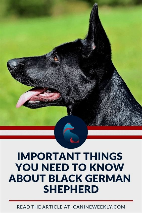 Bark Tudor Dog Training Indianapolis Dog Training Tips For