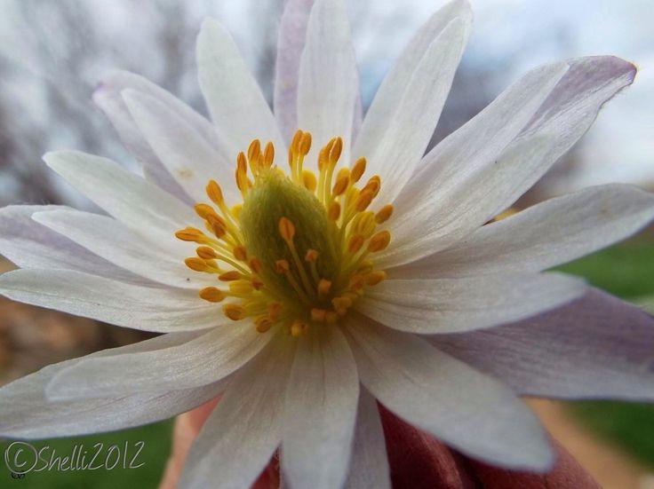"""""""Beautiful bloomer"""" photo by Shelli Fitzpatrick"""