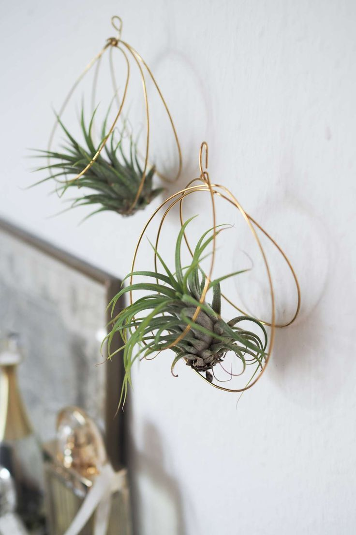Diy Aerial Plants Holder Made Of Wire Hanging Air Plants Air Plant Holder Air Plants Diy