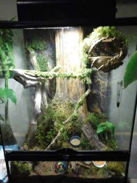 473 Best Images About Aquariums Vivariums Paludariums